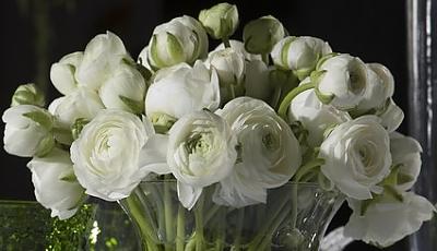 Fotolia_26862510-fleurs-croper